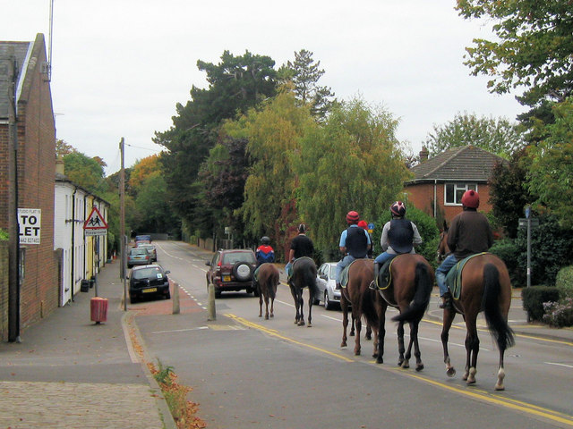 Race Horses at Tring Station