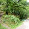 Track meets footpath in the Forest of Dean