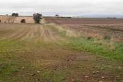 Arable land, Dunninald