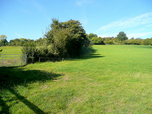 Pasture at Monk Hill 1