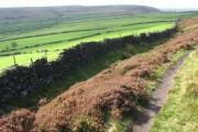 Farmland beside Abney Moor