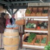 All local vegetables in season at Poulsden Lace