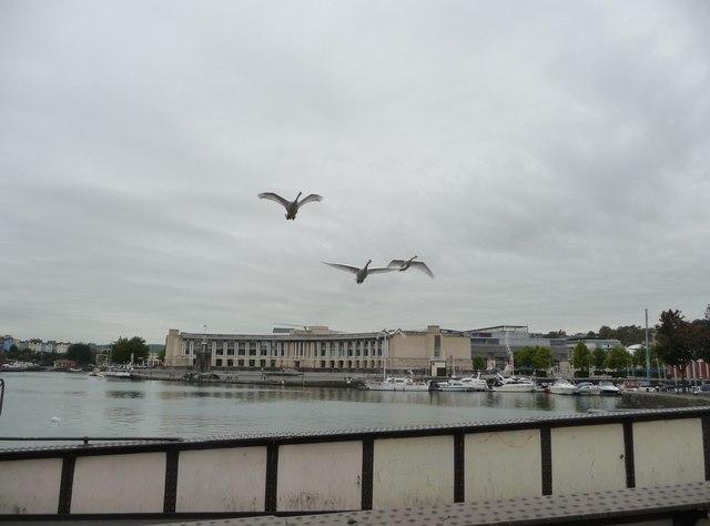 Bristol : The River Avon, Marina & Swans