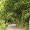 Lane at West Monkton