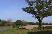 Stubble field near Thurgarton