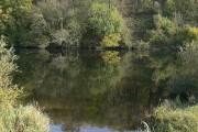 Flintham Woods