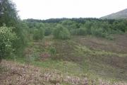 Woodland near Tomacharich