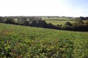 Land near Carters Farm