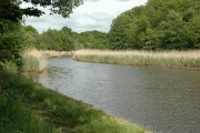 Witton Brook reed beds