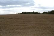 Farmland, Warter Wold