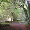Footpaths cross at the corner of Pavis Wood