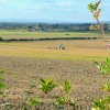 Autumn cultivations