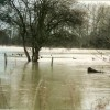 River Windrush in flood
