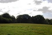 Woodland near Chafford