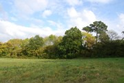 Woodland by the footpath