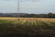 Burton Meadows