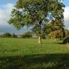 Tree opposite Bosbury House