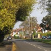 Bus-pruned tree, Cubbington Road, New Cubbington
