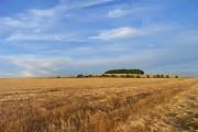 Farmland, North Stoke