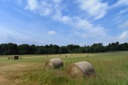 Field with baled hay, Ellesborough