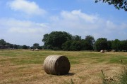 Field with baled hay, Farleigh Wallop