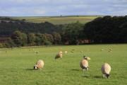 Pasture, Withington