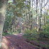 Autumnal splendour in Smeekley Wood