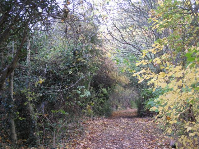 Perimeter track, Newbold Comyn Golf Course