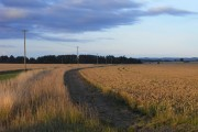 Farmland, Urchfont