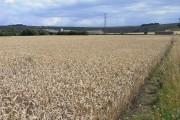 Farmland, Pewsey