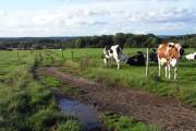 Pasture, Padworth