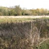 Flood-meadow by Radford Road, Royal Leamington Spa