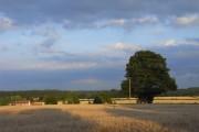 Farmland, Kingsclere Woodlands