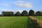 Pasture, Ashford Hill