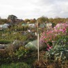 St Mary's allotments, Radford Road