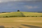 Farmland below Castle Hill, Wittenham Clumps