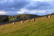 Pasture above Boreland