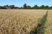 Farmland with footpath near Pewsey