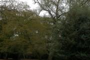 Gritnam Wood