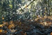Melting frost, Migdale Wood.