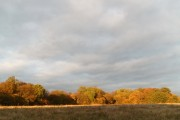 Woodland near Navestock Side