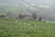 Farmland in the Afon Twymyn valley