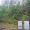 Woodland behind Wadhurst Station