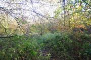 Woodland by the footpath near Battle
