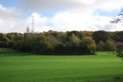 Woodland near Powdermill Stream