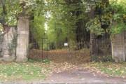 Woodland in Shipton Under Wychwood