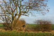 Lane near Sproatley