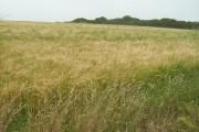 Farmland near Crean