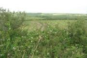 Hedgerow and farmland near Higher Alsia Farm