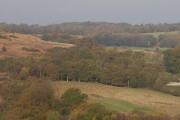 Woodland near Crabtree Farm